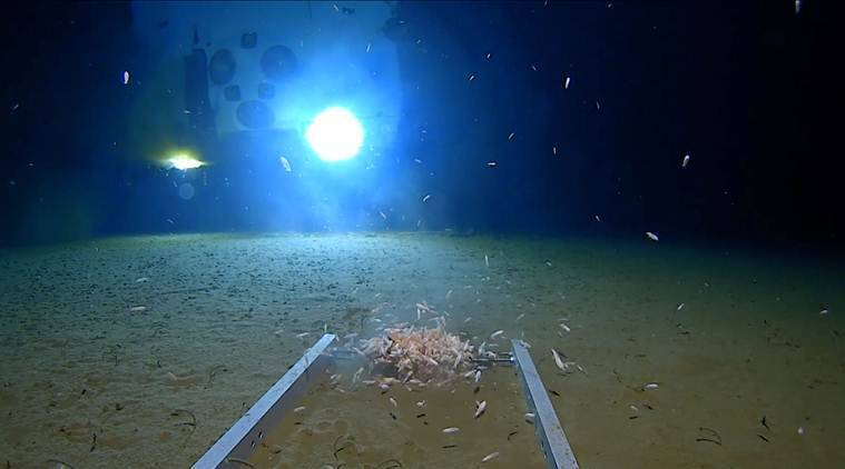 Explorer dives to deepest point in the ocean, stunned to find trash