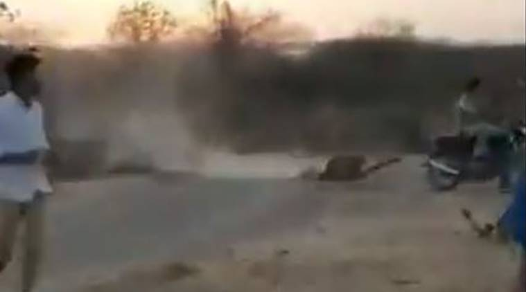 Gujarat: Video showing man dragging carcass behind his bike and followed by lion goes viral