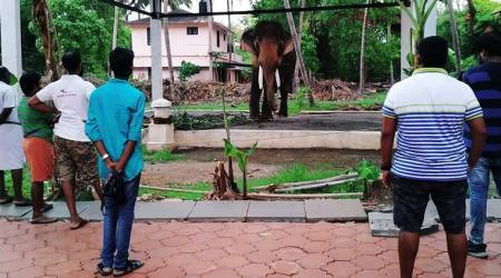 Ending weeks of suspense, admin allows controversial tusker to be part of Thrissur Pooram lineup