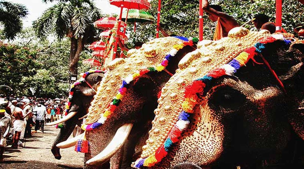 Kerala Elephant Owners Say No To Parading Tuskers From May 11 Thrissur Pooram Festivities In Disarray Cities News The Indian Express All elephant png images are displayed below available in 100% png transparent white background for free download. kerala elephant owners say no to