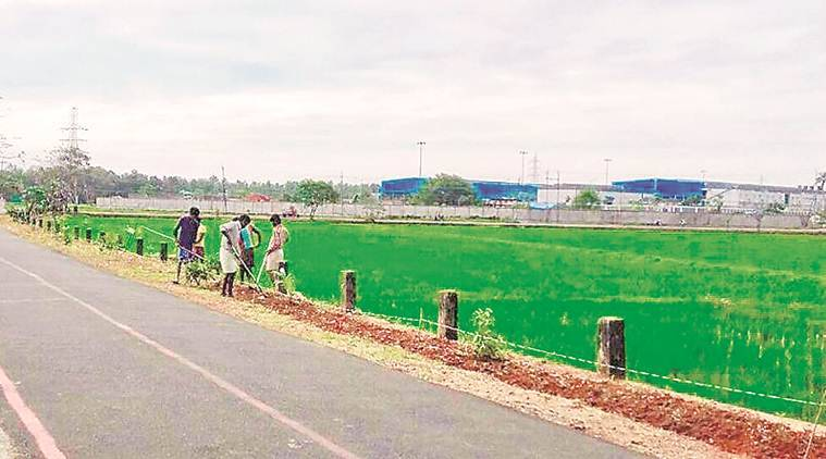 Waste dump near Kochi is now home of new rice brand