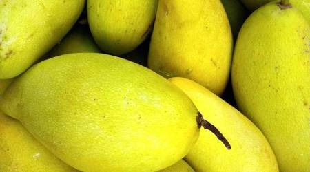 mango during pregnancy