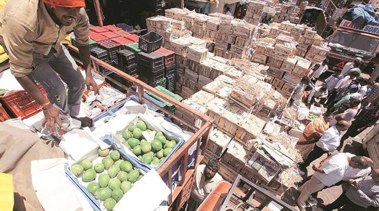 Maharashtra mango growers seek compensation, cite crop loss and higher production cost