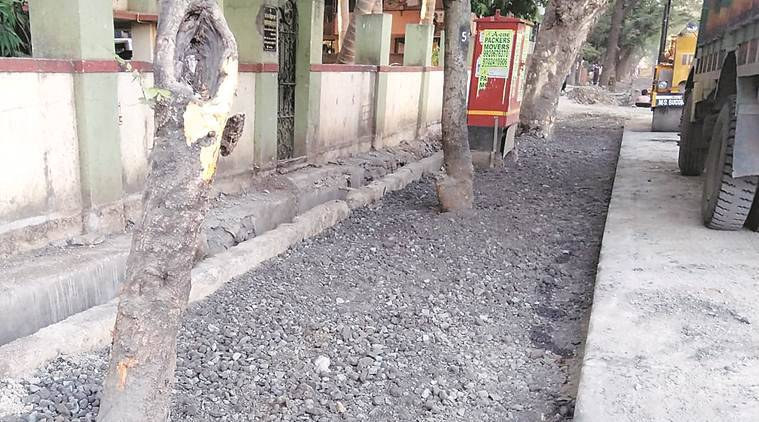 Mandatory area around trees: Residents allege contactors defying rules, BMC re-issues circular to all departments