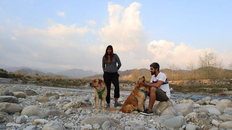 travel, travel with dogs, india, Labrador, golden retriever, indian express