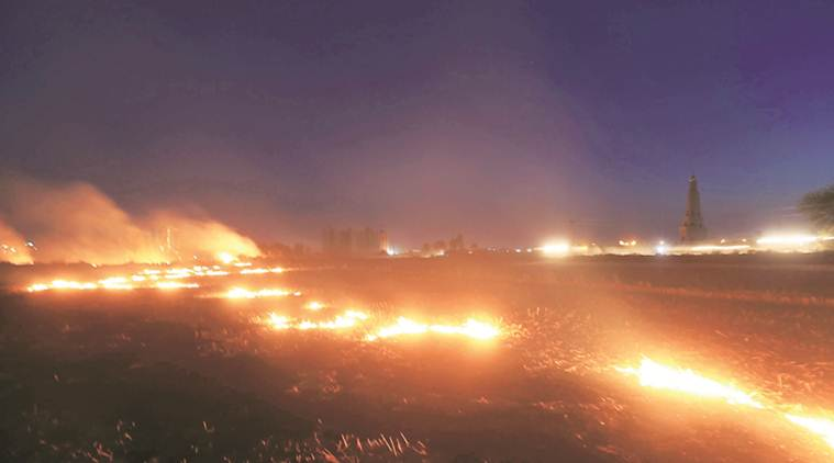 With 11,650 stubble fires in 2019, Punjab breaks 2018 record