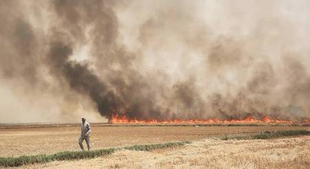 National Green Tribunal, Crop burning, Crop burning tackle, Agriculture, Air pollution, Punjab, Haryana and Uttar Pradesh, Indian Express news