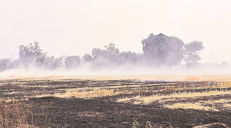 Punjab: Stubble burning down by 40%, but coming weeks to be a challenge for pollution board