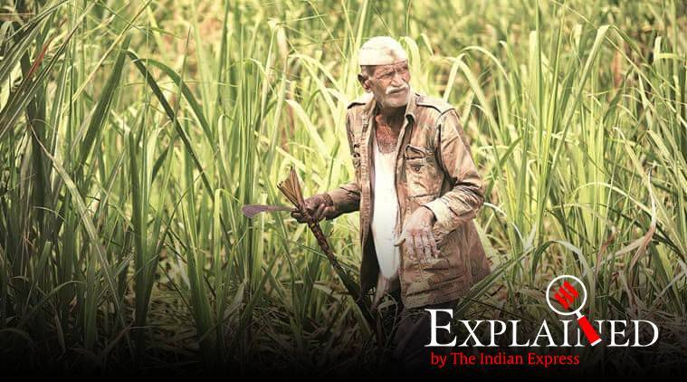 express explained, sugarcane millers, sugarcane crushing season, Harvesting and Transportation charges, fair remunerative price, explained news, indian express