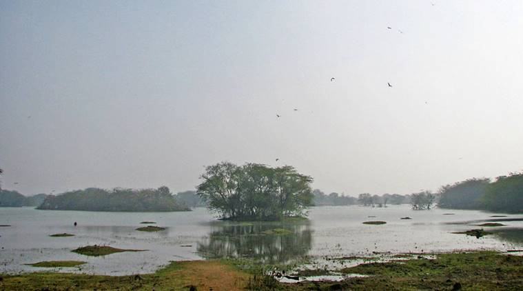Sultanpur Bird Sanctuary, weekend, outings, Damdama Lake, Delhi NCR, Chokhi Dhani, Surajgarh Farms, Aravalli Hills, Kingdom of Dreams, Indian culture and experience,