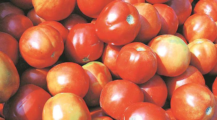 delhi, tomato prices, tomato prices in delhi, delhi tomato prices, delhi govt, mother dairy, rise in tomato prices, rain, indian express news