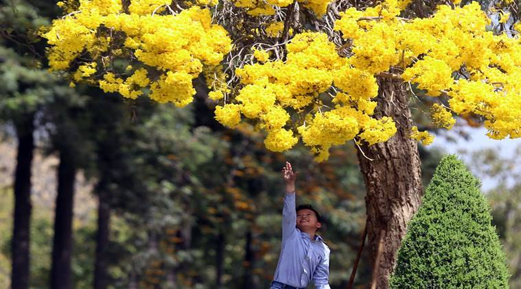 Philippines law requires students to plant 10 trees if ...