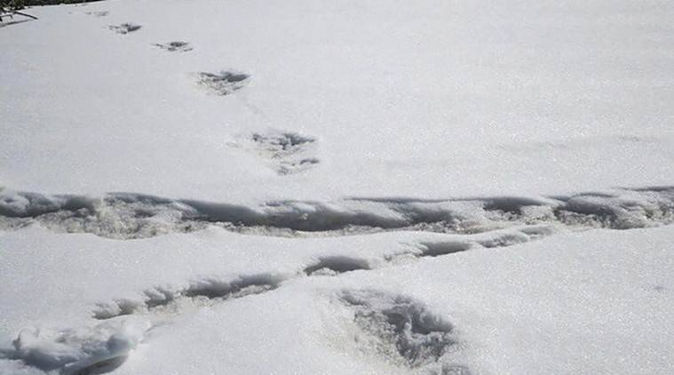 Yeti's foot & Army mouth: Mountaineering expedition team claims sighting