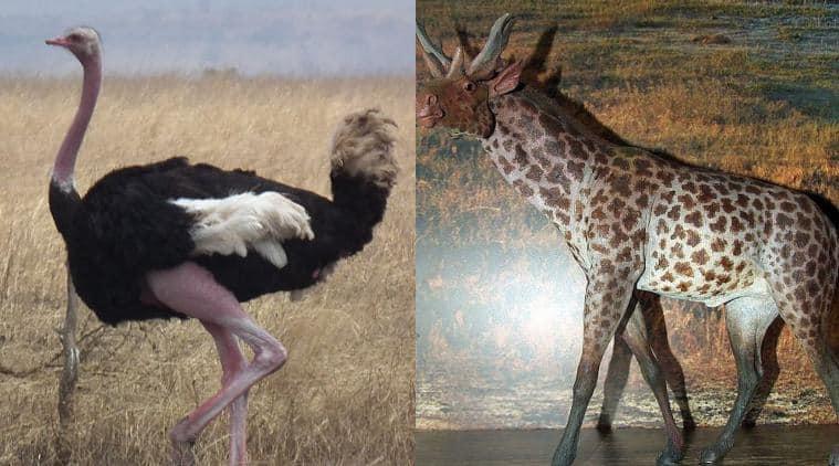 Giraffe dating hvordan du skriver en profil for online dating nettsted