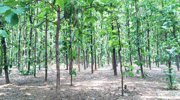 bmc, deforestation in mumbai, mumbai felling trees, Mumbai Trans-Harbour Link, kurla vakola project, mumbai city news