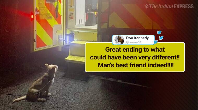 dog, doh saves owner, dog rescue owner, loyal pup, dog, Ireland, Ireland pup rescues owner, dog leads rescue, dog owner ditch rescue, trending, indian express, indian express news
