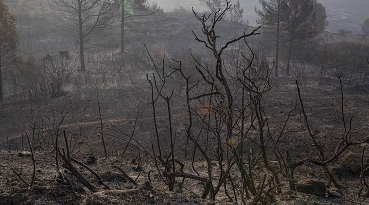 europe heatwave, catalonia forest fire, catalonia fire, france heatwave, forest fires in france, forest fires in catalonia, world news, Indian Express