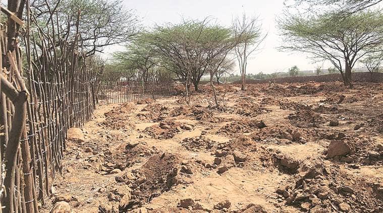 Delhi, Delhi News, Delhi green cover, NGT, rajokri, rajokri tree felling, delhi green patches, delhi trees fell, Indian Express