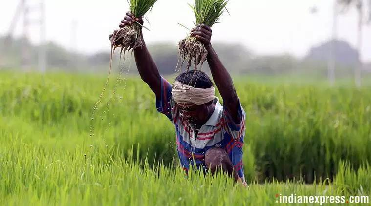 Crop insurance, Crop insurance scheme, Farmers, Agriculture, Ministry of State for Agriculture, Farmers union, Agriculture ministry, state government, Indian Express news, Latest news