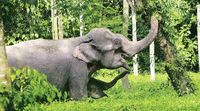 odisha news, odisha elephants killed, odisha elephants, wildlife in odisha