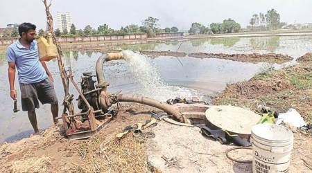 Chandigarh, Chandigarh news, Mohali, Mohali news, Zirakpur Farmers, Shatabgarh and Chatt village Farmers, sewerage water for irrigation, Zirakpur Farmers using sewerage water, soil pollution, water pollution, Zirakpur vegetable quality, health hazard, Indian Express news