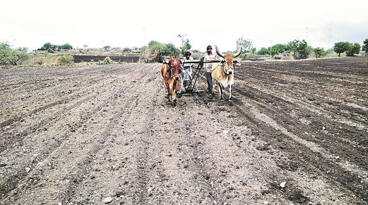 Early showers: Saurashtra farmers get a headstart from Cyclone Vayu
