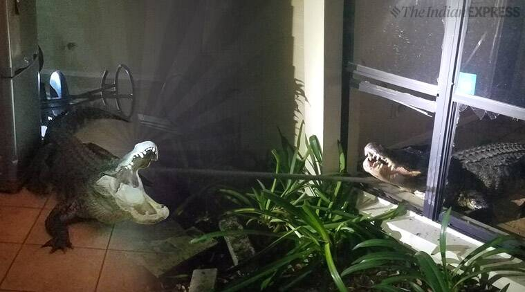 Alligator Breaks Through Florida Kitchen Window