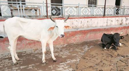 State govt allots Sukhdarshanpur cowshed to charitable trust