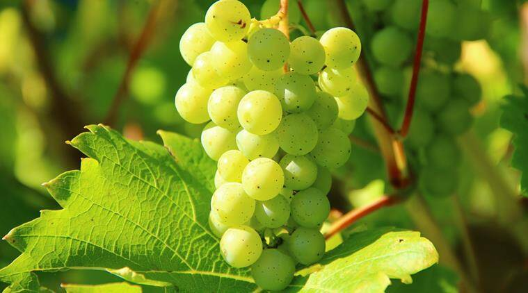 grapes, healthy liver, liver health, indian express, indian express news