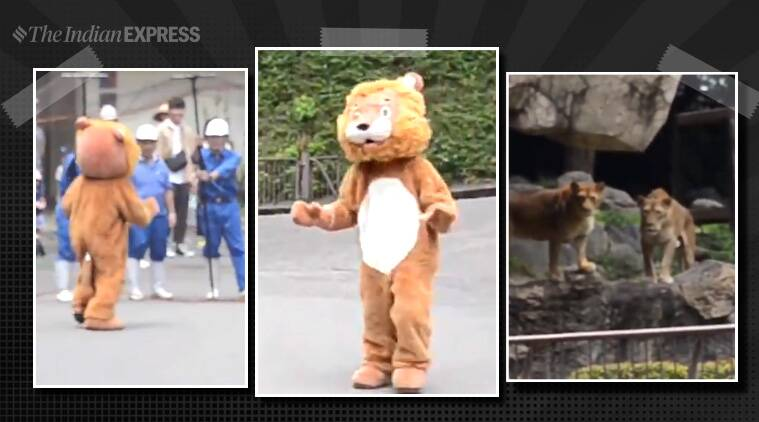 Japan zoo stages safety drill with staff member dressed in lion costume; video clip goes viral - The Indian Express