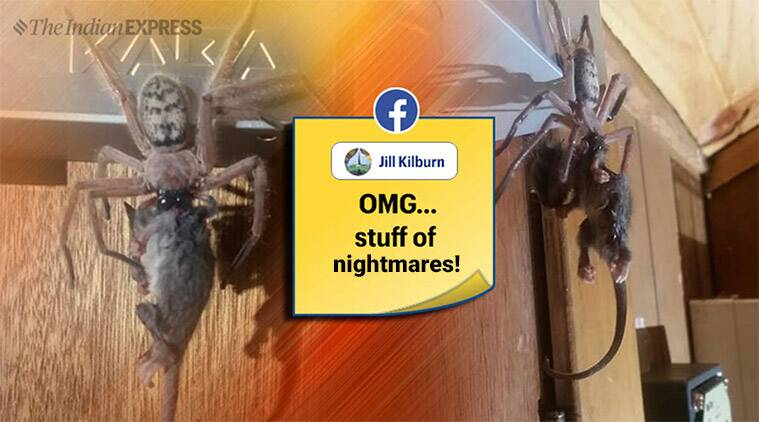 """Graham Milledge, the Australia Museum arachnology collection manager told the news website that it was an """"unusual event""""."""