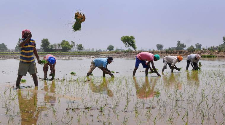 Explained: Is paddy cultivation sucking Haryana's water table dry?