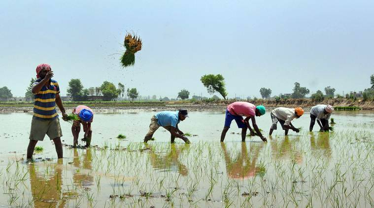 Haryana, Haryana news, Paddy farming Haryana, Haryana Paddy farming, Jal hi jeevan scheme, indian express, latest news