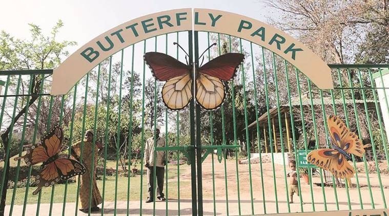Chandigarh's butterfly park: A dash of vibrance