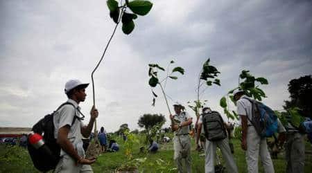 green maharashtra, green maharashtra initiative, maharashtra plantation drive, plantation drive in maharashtra, india news, Indian Express