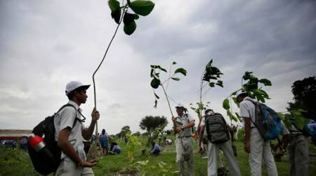In Patiala, plant 10 saplings to get arms licence, 5 to renew it