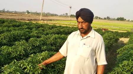 Punjab farmers slowly turn to treated wastewater for irrigation