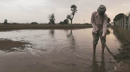 punjab soil and water conservation department, soil and water conservation department, rainwater harvesting, punjab rainwater harvesting, rainwater harvesting in punjab, india news, Indian Express