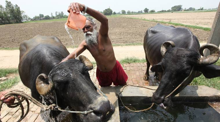 Punjab, Punjab water scarcity, Punjab water shortage, punjab agriculture, water shortage in punjab, punjab farmers, punjab rivers, Groundwater, tube wells, Indian Express news