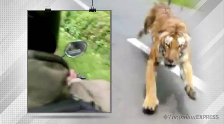 tiger chases motorcyclist, tiger chase viral video, kerala, kerala tiger chase, Wayanad, tiger chase Wayanad, trending, indian express, indian express news