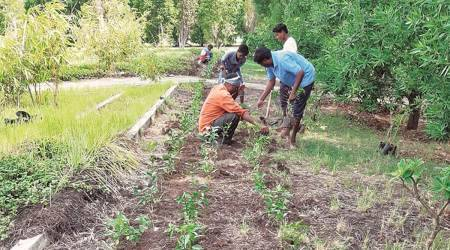 Nelda Foundation, Nelda Foundation trees growing target, Nelda Foundation pune, pune city news