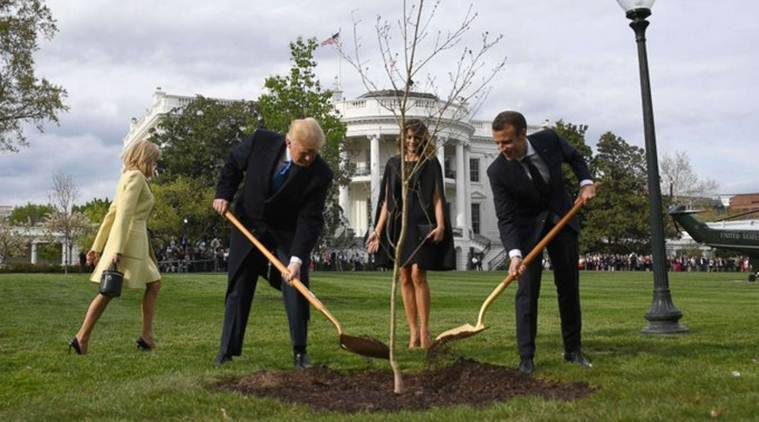 Oak tree planted by Macron, Trump has died
