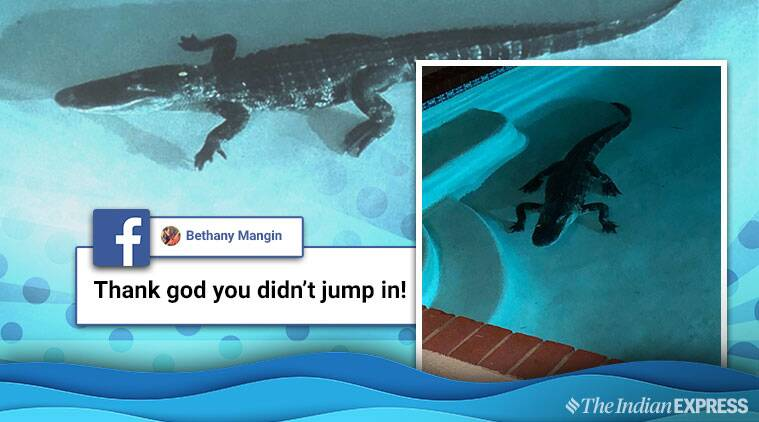 Oh my god! This is in my pool': Woman wakes up to an 7-foot