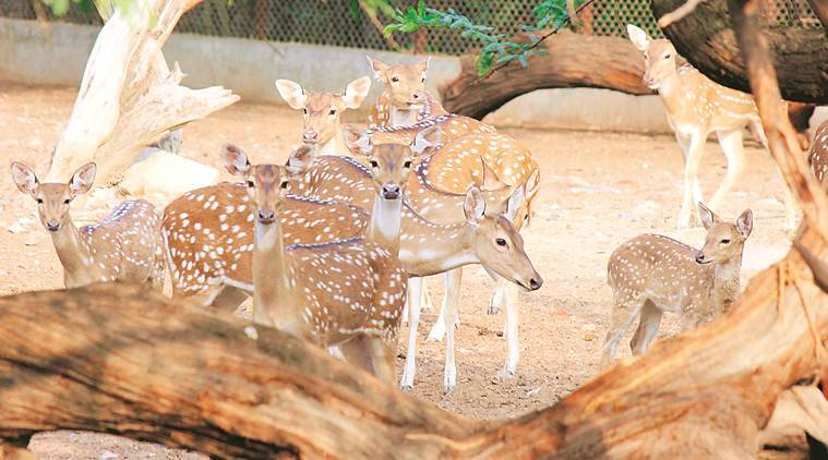 delhi zoo, delhi zoo animal deaths, delhi zoo animal medicines, delhi zoo staff, Ministry of Environment, Forest and Climate Change, delhi news