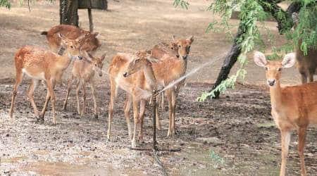 delhi zoo, delhi zoo authority, delhi zoo control, central ministry, delhi, delhi news, indian express