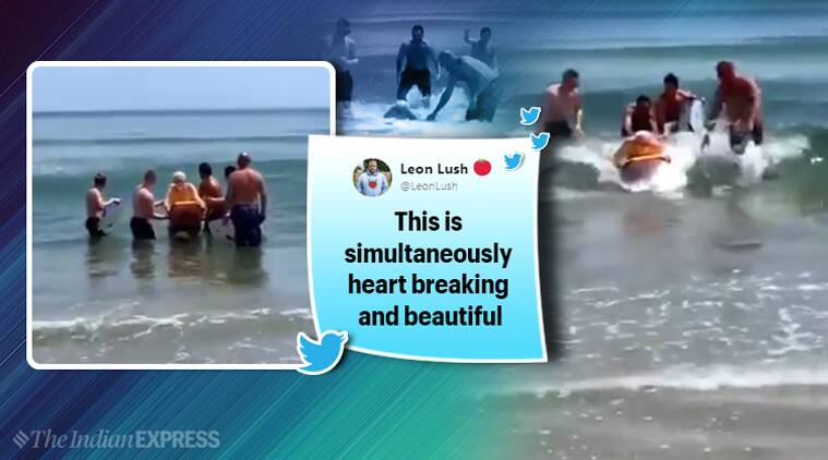 dementia, couple with dementia, last swim, old couple, emotional story, viral old couple story, viral video, heartwarming video, good news, indian express, indian express news