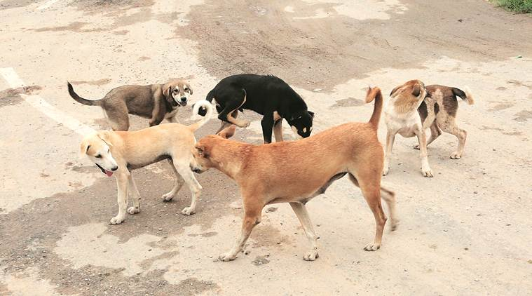 Dogcatchers hired by municipal body subjected canines to extreme cruelty: Police