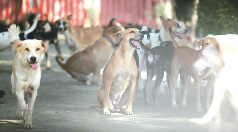 madhya pradesh, dogs transferred, canines transferred, bjp mocks move, madhya pradesh police dogs transfer, congress vs bjp, madhya pradesh government, indian express