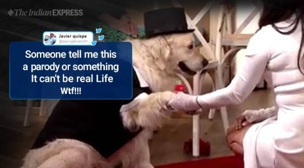 woman marries dog, woman marries dog live tv, this morning show woman dog wedding, bizarre news, viral videos, uk news, indian express