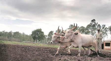 Govt pushed for zero budget farming, top scientists question